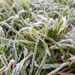 Not just heat: even our spring frosts can bear the fingerprint of climate change