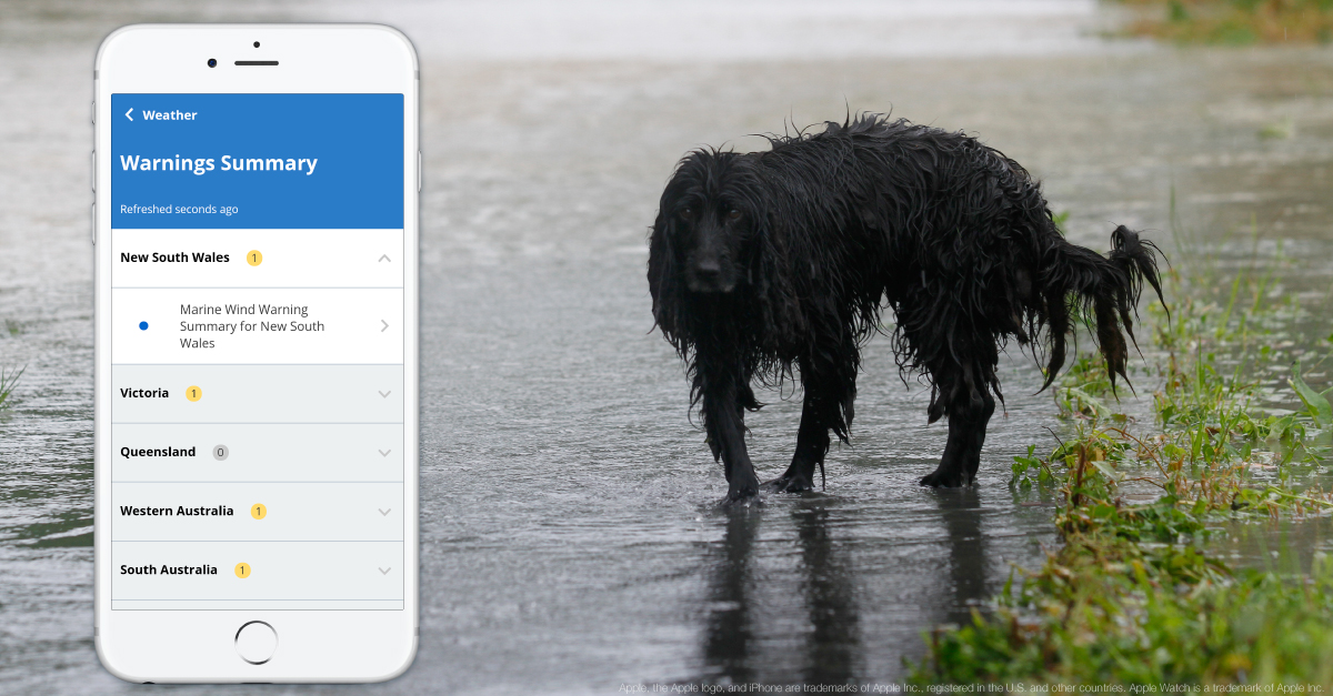 Dog in the rain and BOM Weather app