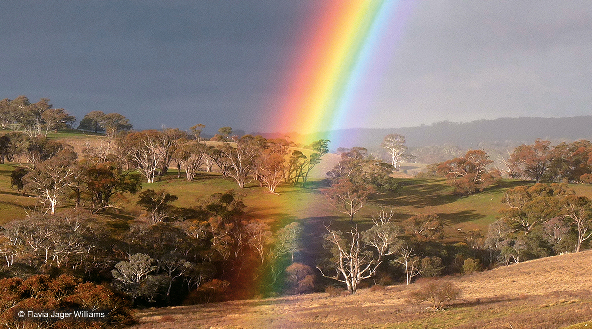 One end of a bright rainbow over green, grassy paddocks with gum trees