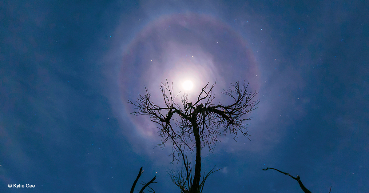 Moon with misty cloud cover, ringed by a reddish halo, with a leafless tree silhouetted in the foreground.