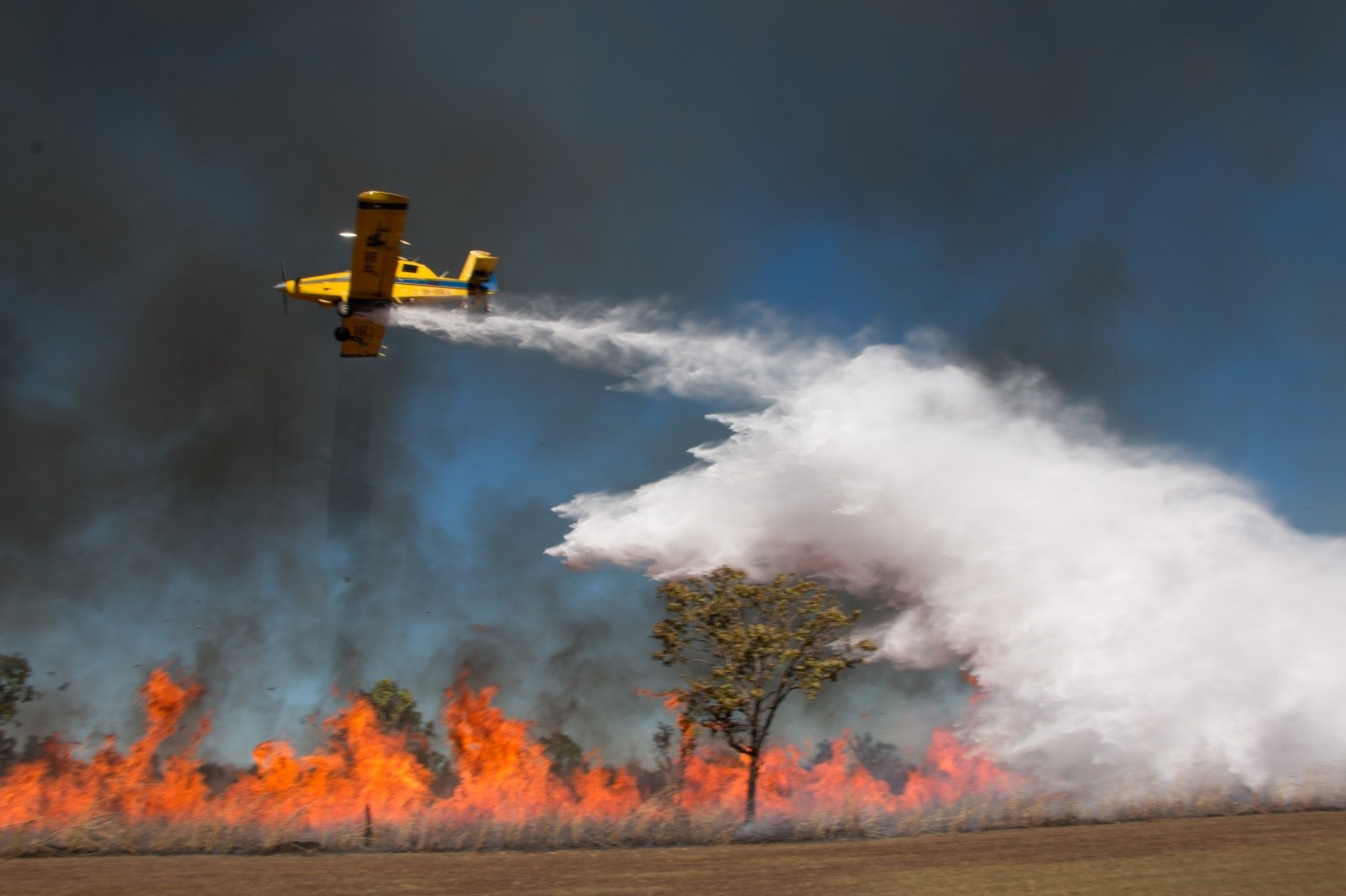 Yellow plane flying above fire burning in low trees, dropping water on the fire.
