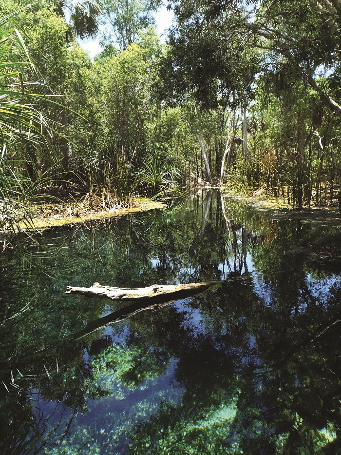 Bitter Springs in the Mataranka region, Northern Territory, an aquatic GDE and popular tourist attraction