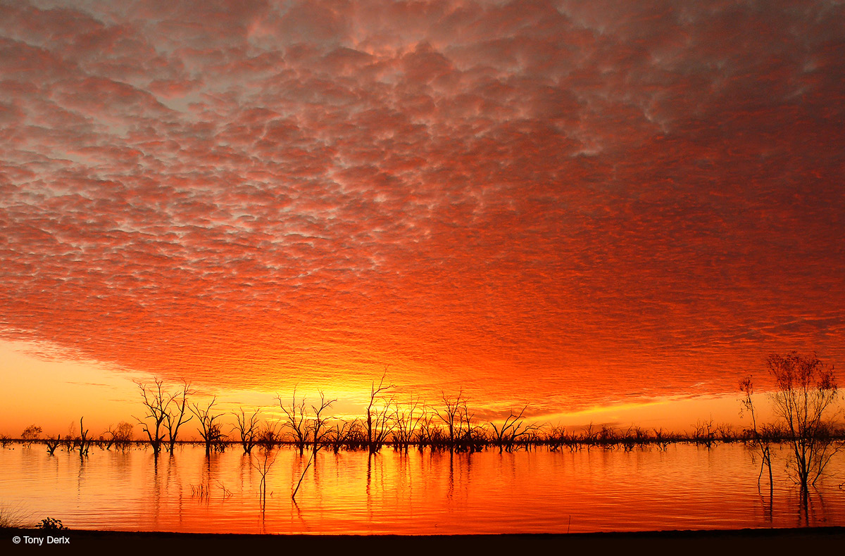 Speckled clouds create a textured layer in the sky that's coloured orange and yellow. It's reflected in the lake waters below, from which silhouetted dead trees are emerging.