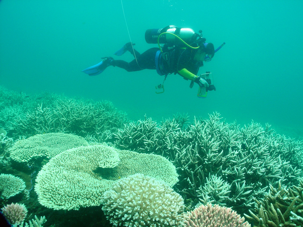Diver photographs bleached white coral in the Great Barrier Reef.