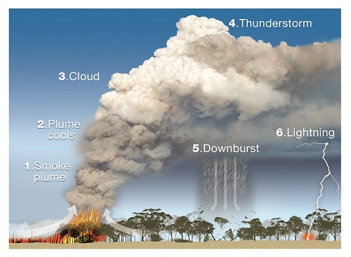 Diagram showing pyrocumulonimbus cloud development, with the steps detailed below